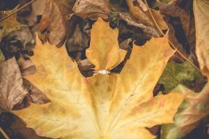 Engagement ring autumn leaves engagement photoshoot Gloucester