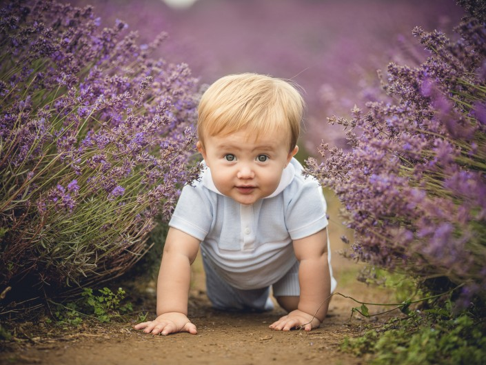 Baby crawling lavender Gloucestershire