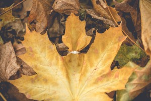 Engagement ring autumn leaves engagement photoshoot Gloucester