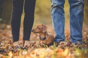 Engagement photoshoot pet dog Gloucester